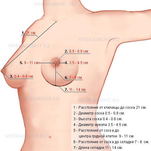 Параметры идеальной груди